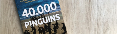 40.000 pinguins