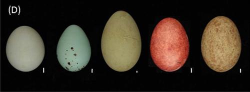 ovos cores