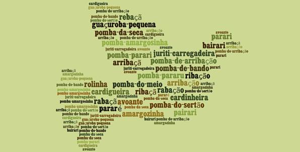 zenaida auriculata