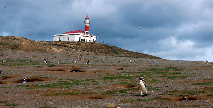 Isla Magdalena Chile