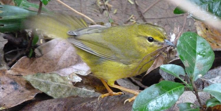 Galeria de fotos: aves do DAHMA, São Carlos – SP