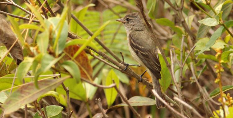 Galeria de fotos: aves da UFSCar (Universidade Federal de São Carlos)