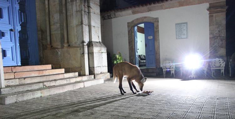 lobo guara no santuário do caraça