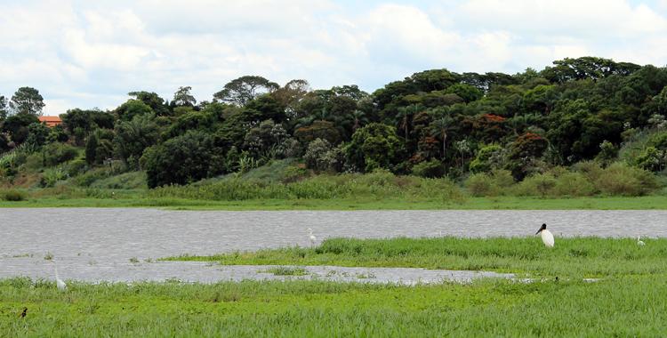 mini pantanal paulista tanqua