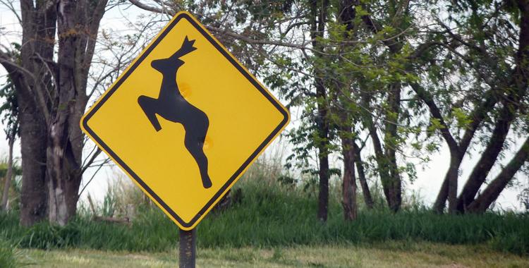 morte de animais silvestres nas estradas