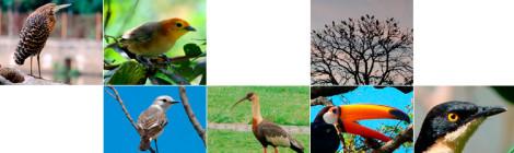 avifauna são carlos