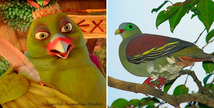 green pigeon zambezia