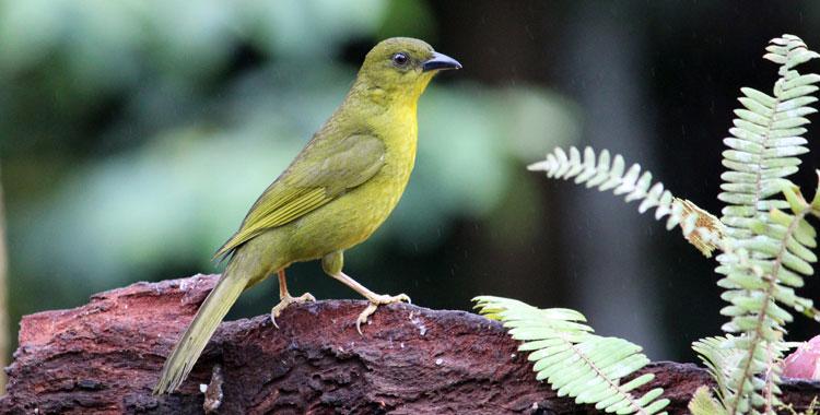 Catirumbava na Trilha dos Tucanos - Tapiraí (SP)