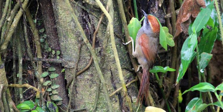 Pichororé na Trilha dos Tucanos - Tapiraí