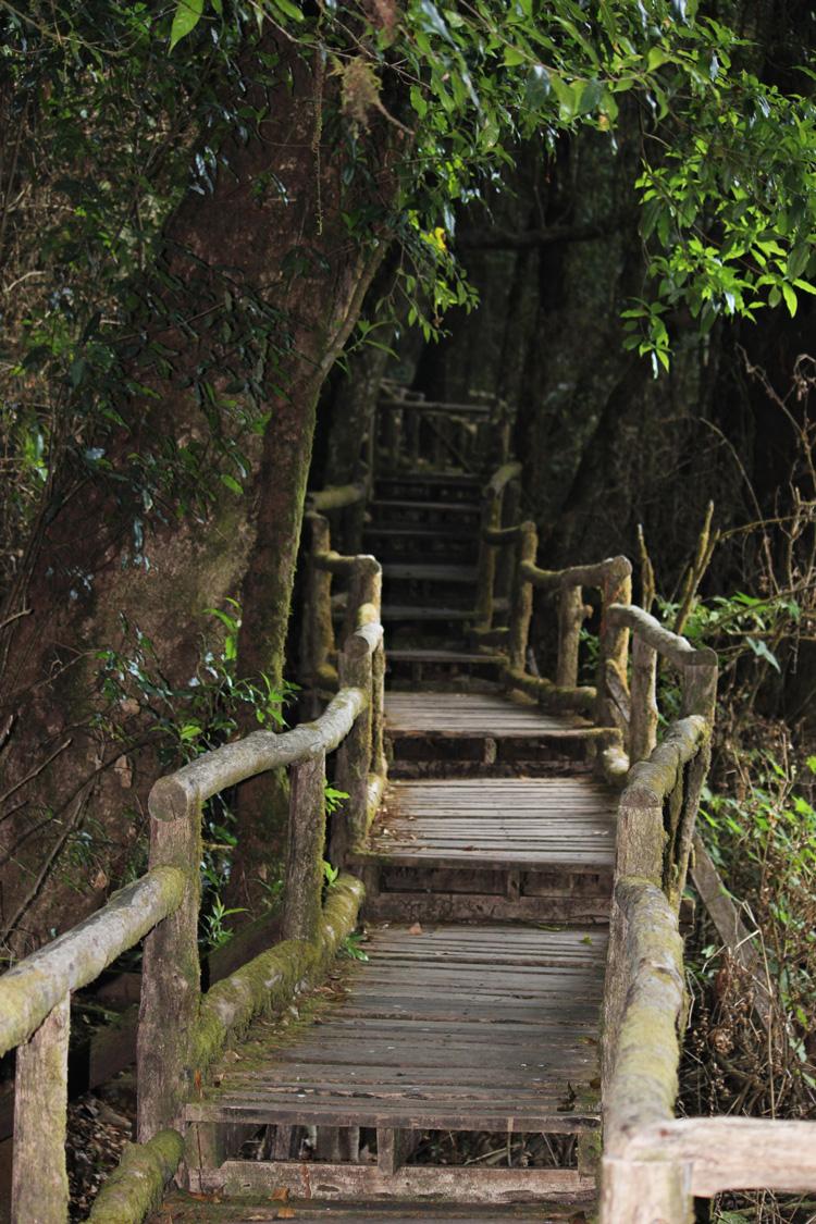 Doi-Inthanon-National-Park-Tailandia