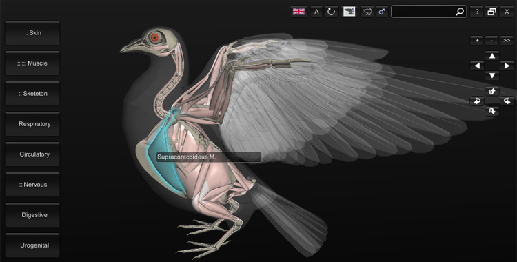 3D Bird Anatomy software 1.0 - A Passarinhóloga