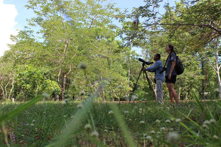 Observando aves em Koh Ker, Camboja