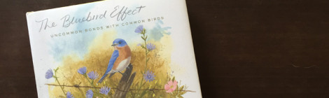 the blue bird effect - Julie Zickefoose