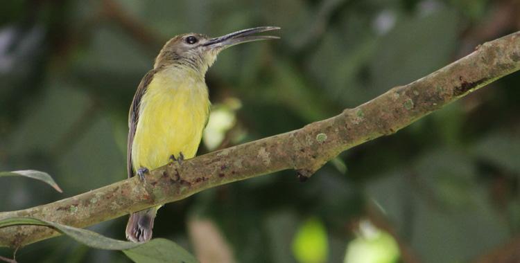Galeria de fotos: Aves da Tailândia