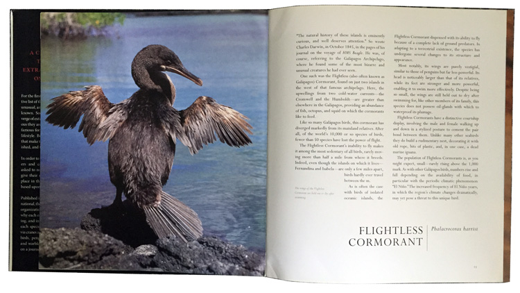 remarkable-birds-flighteless-cormorant
