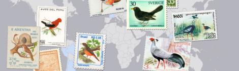 Bate-papo sobre viagens e passarinhos em Sorocaba - SP