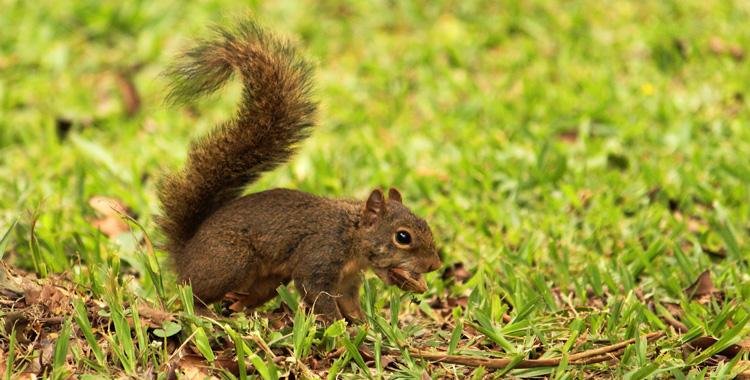 esquilo-parque-edmundo-zanoni-atibaia