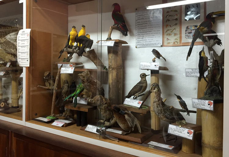 aves taxidermizadas