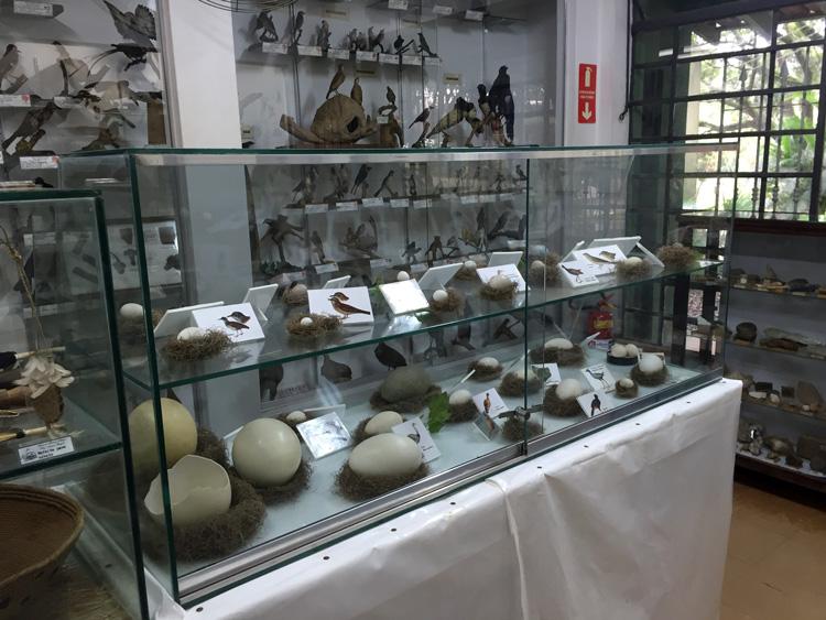 museu de historia natura antonio pergola