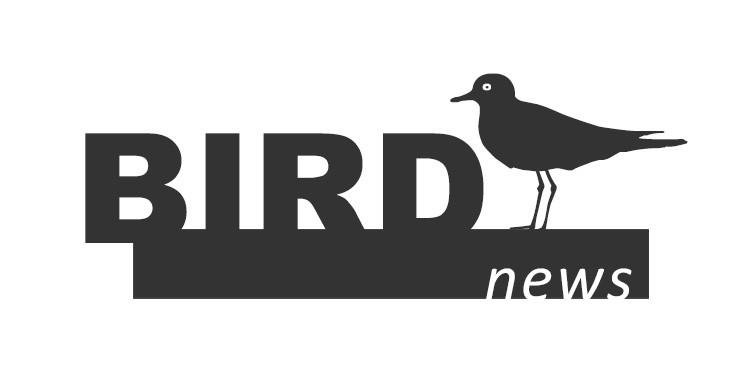 birdnews