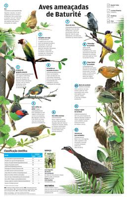 aves ameaçadas de baturité