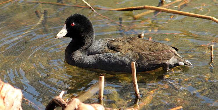 Galeria de fotos: Aves de Nova Iorque (EUA)