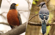 birdwatching central park
