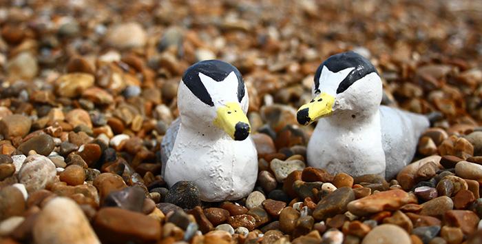 fake little tern