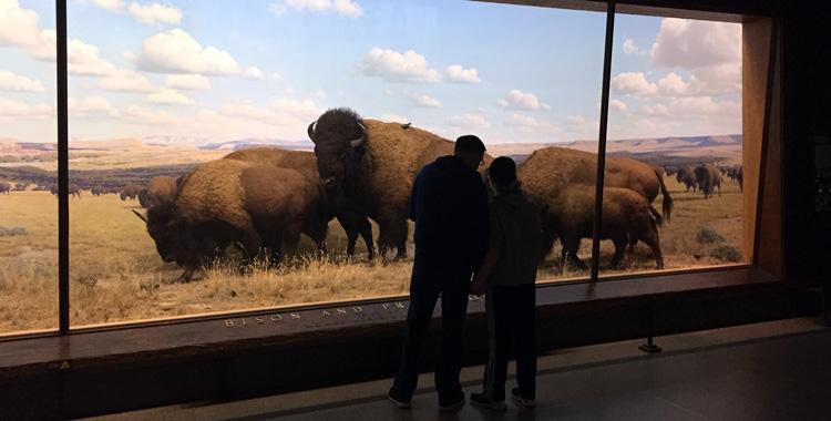 diorama com bisões