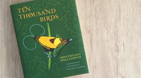 ten thousand birds book