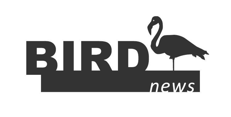 Bird News logo