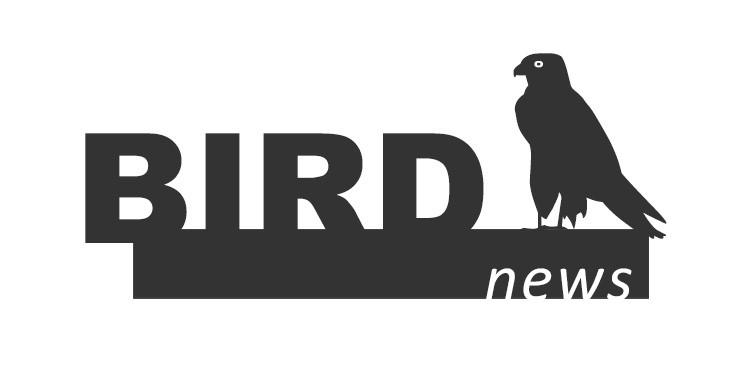 birdnews julho