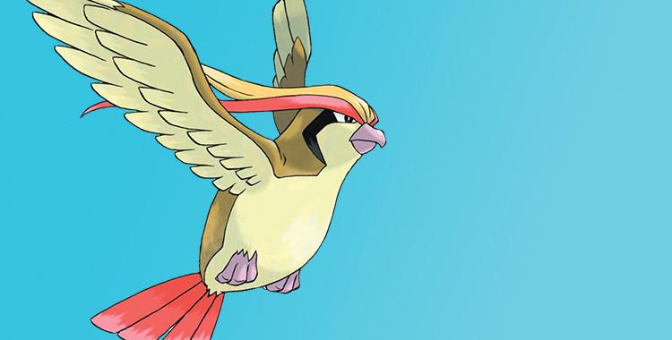 Sobre aves e pokémons