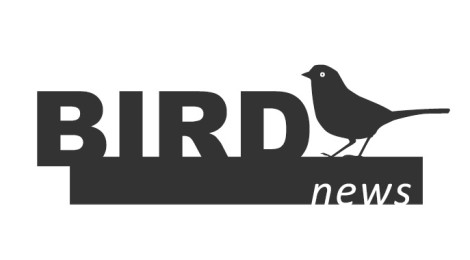 BirdNews | Agosto 2017