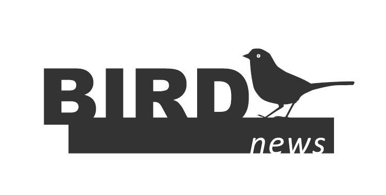 BirdNews   Agosto 2017
