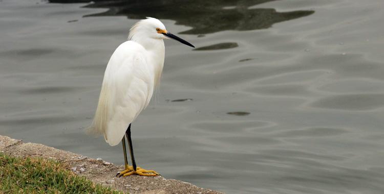 Galeria de fotos: Aves de Florianópolis – SC