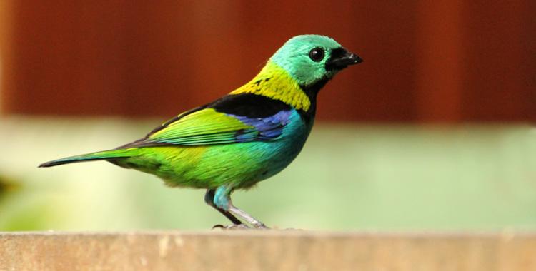 Galeria de fotos: Aves de Paraty