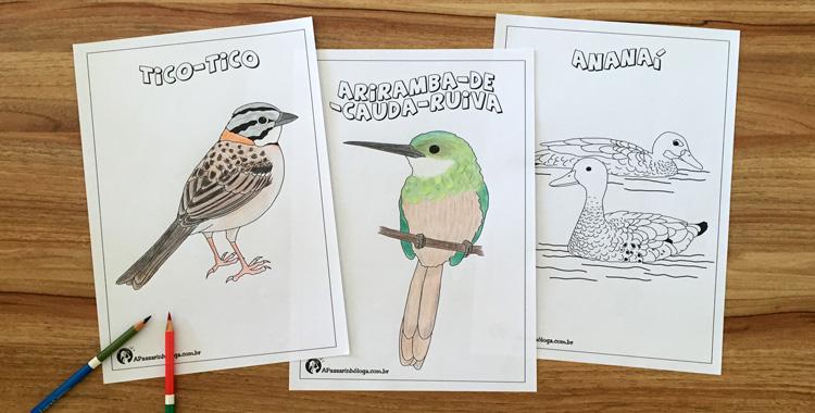 pássaros para colorir