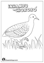 inhambu-chororó para colorir