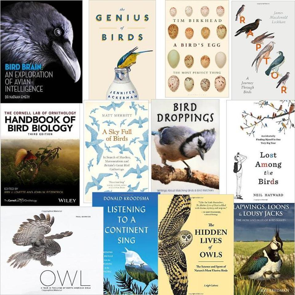 livros sobre aves e birdwatching