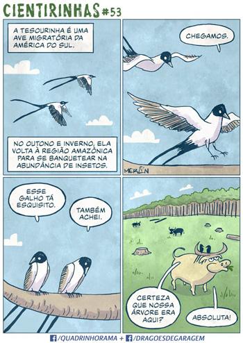 cientirinha 53 - migração das tesourinhas