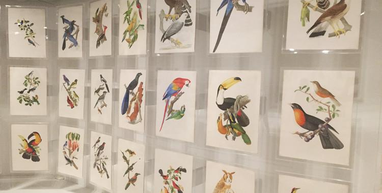 Aves da coleção Brasiliana Itaú