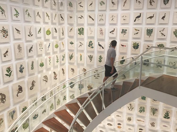Coleção Brasiliana Itaú Cultural