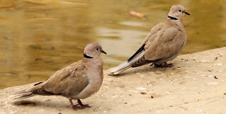 Galeria de fotos: Aves da Espanha