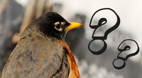 aplicativos de identificar aves