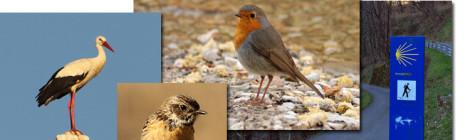 aves do caminho de santiago de compostela