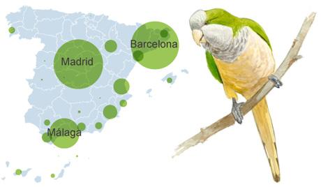 distribuição da caturrita na espanha