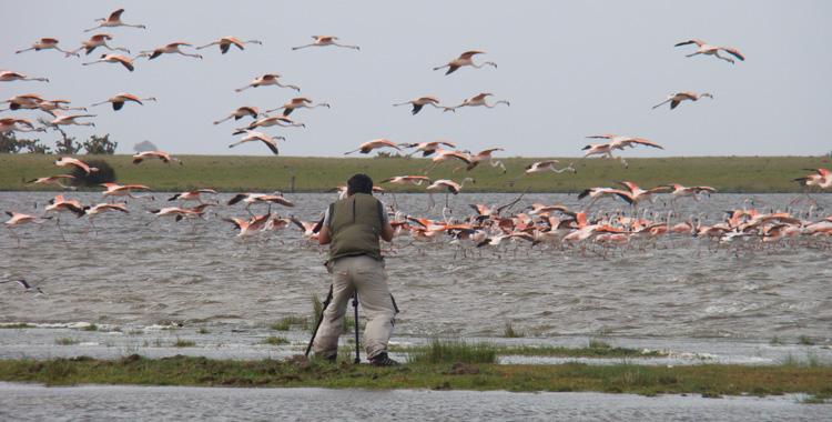 festival brasileiro de aves migratórias 2017