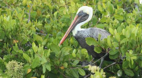Galápagos #1 - Ilha Santa Cruz