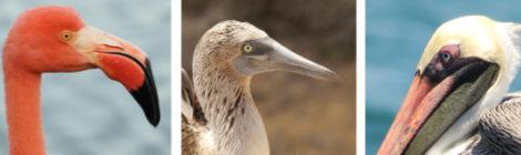 Aves de Galápagos, Equador